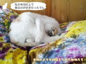私の布団の上で眠るのが好きだったでん