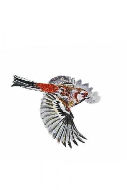 166538-ベニマシコ-飛翔