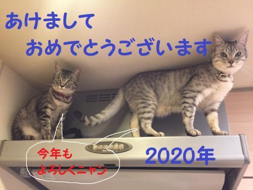 IMG_8344_convert_20200102153032.jpg