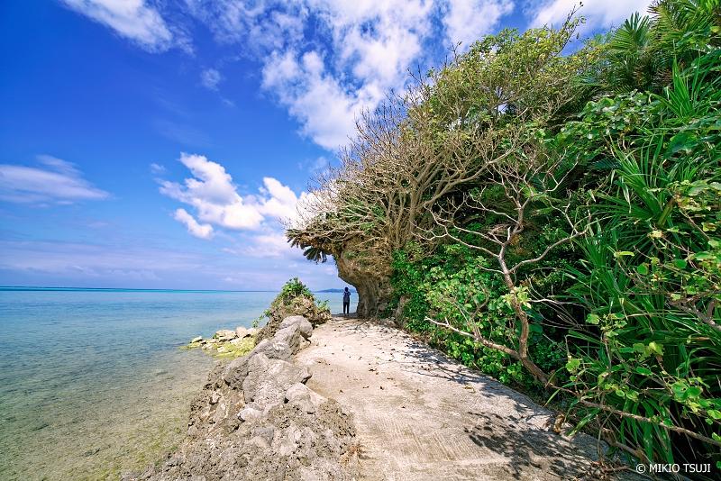 絶景探しの旅 - 絶景写真 No.1263 サンゴのような木々の道 (小浜島 コーラルビーチ/沖縄県八重山郡竹富町)