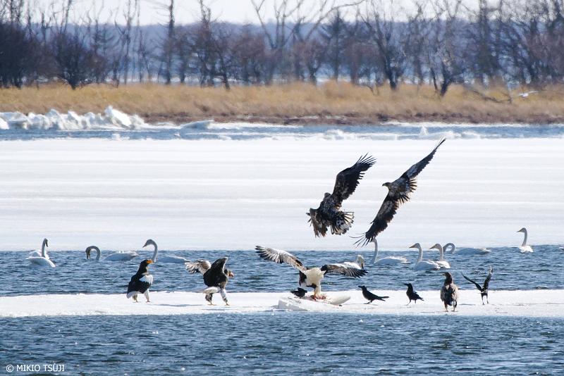 絶景探しの旅 - 絶景写真 No.1266 野付半島の野鳥たちの風景 (北海道 別海町 野付)