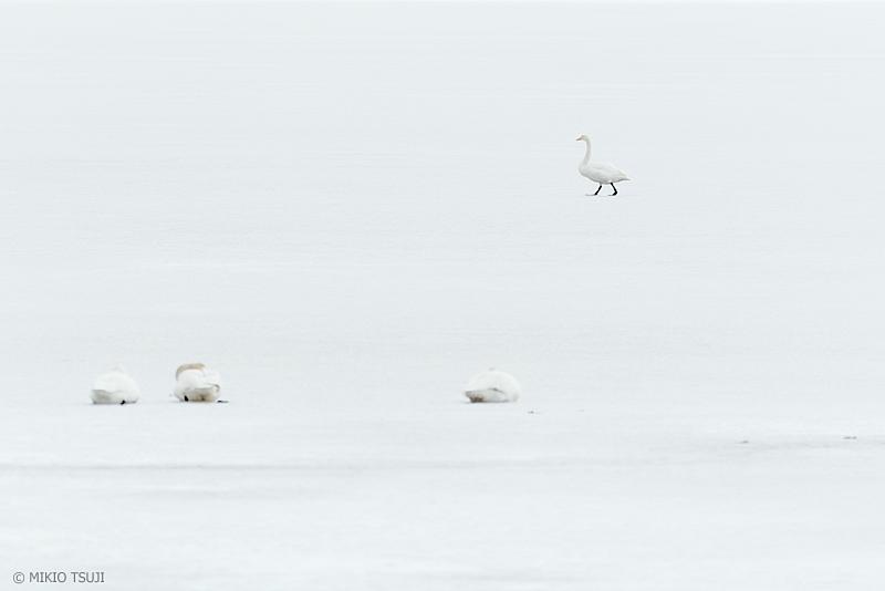 絶景探しの旅 - 絶景写真 No.1267 白の世界を歩く (北海道 別海町 野付)