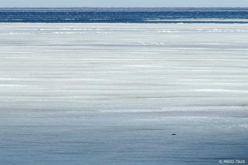 絶景探しの旅 - 絶景写真 No.1268 野付湾を飛ぶ (野付半島/北海道 別海町)